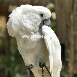花漾庭院精品客栈老板小白 鹦鹉学舌带来了很多的客流量