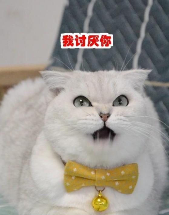 开挂猫咪秀的个人主页   二疯和胖哥有着极高的人气